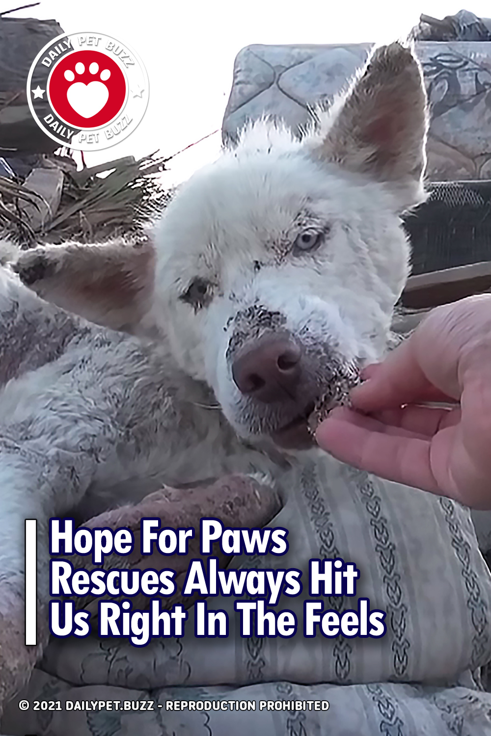 Hope For Paws Rescues Always Hit Us Right In The Feels