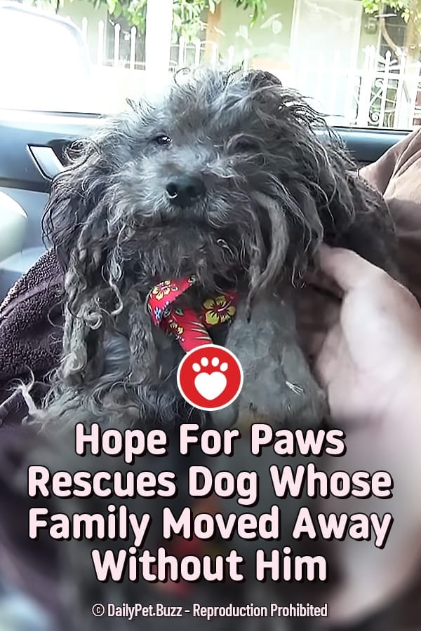 Hope For Paws Rescues Dog Whose Family Moved Away Without Him