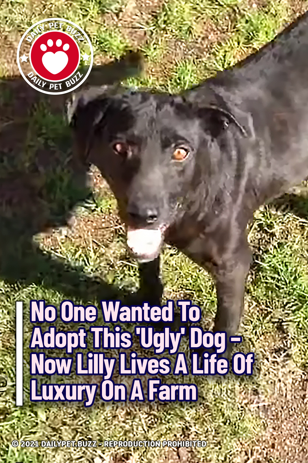 No One Wanted To Adopt This \'Ugly\' Dog – Now Lilly Lives A Life Of Luxury On A Farm
