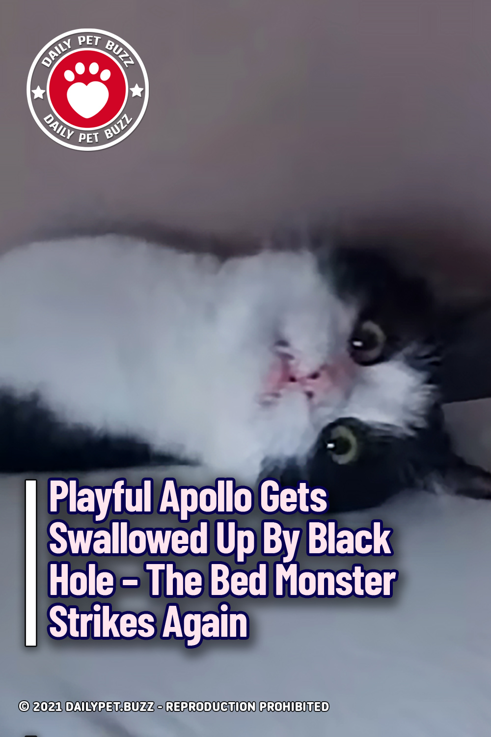 Playful Apollo Gets Swallowed Up By Black Hole – The Bed Monster Strikes Again