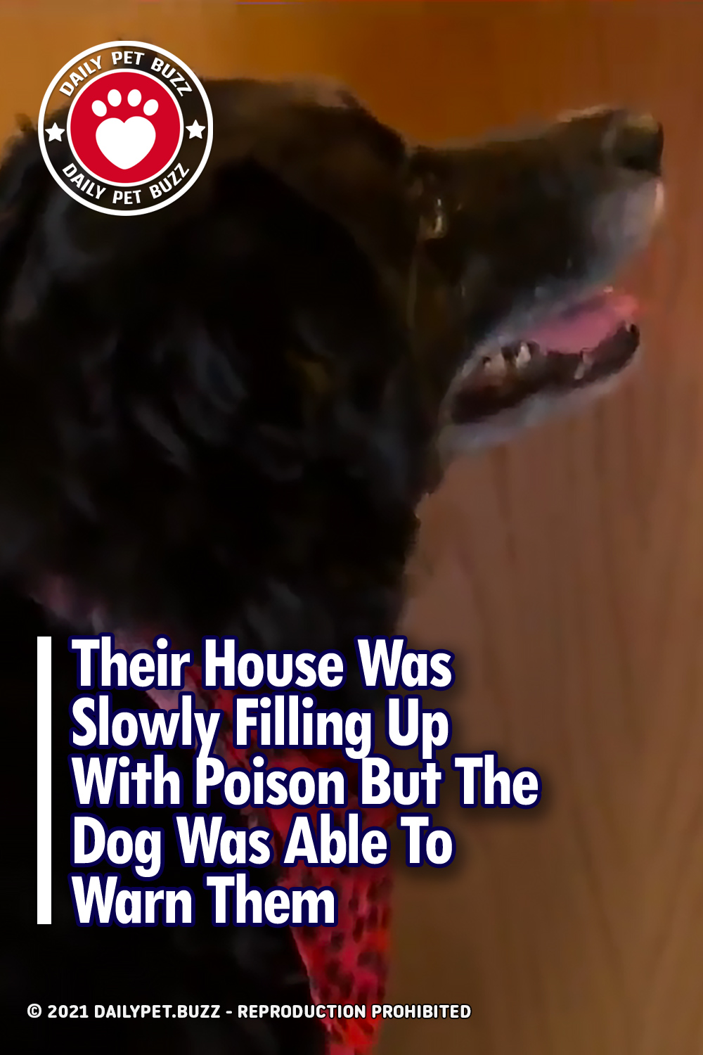 Their House Was Slowly Filling Up With Poison But The Dog Was Able To Warn Them