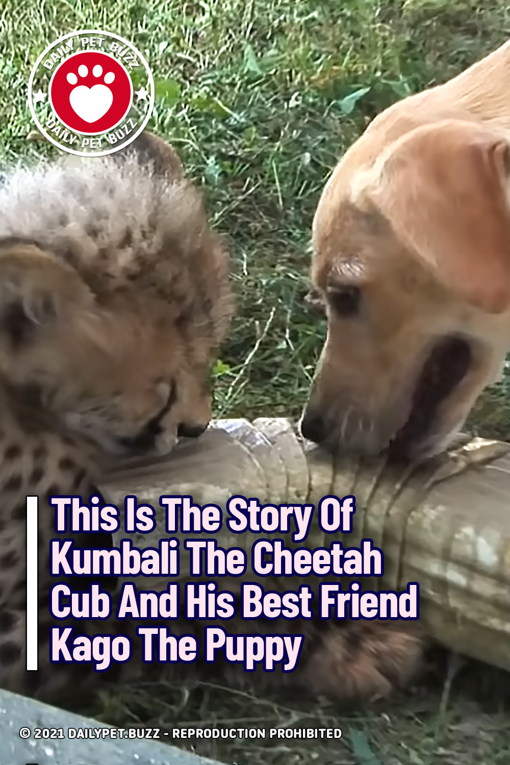 This Is The Story Of Kumbali The Cheetah Cub And His Best Friend Kago The Puppy