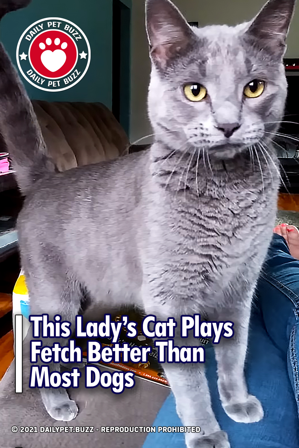 This Lady\'s Cat Plays Fetch Better Than Most Dogs
