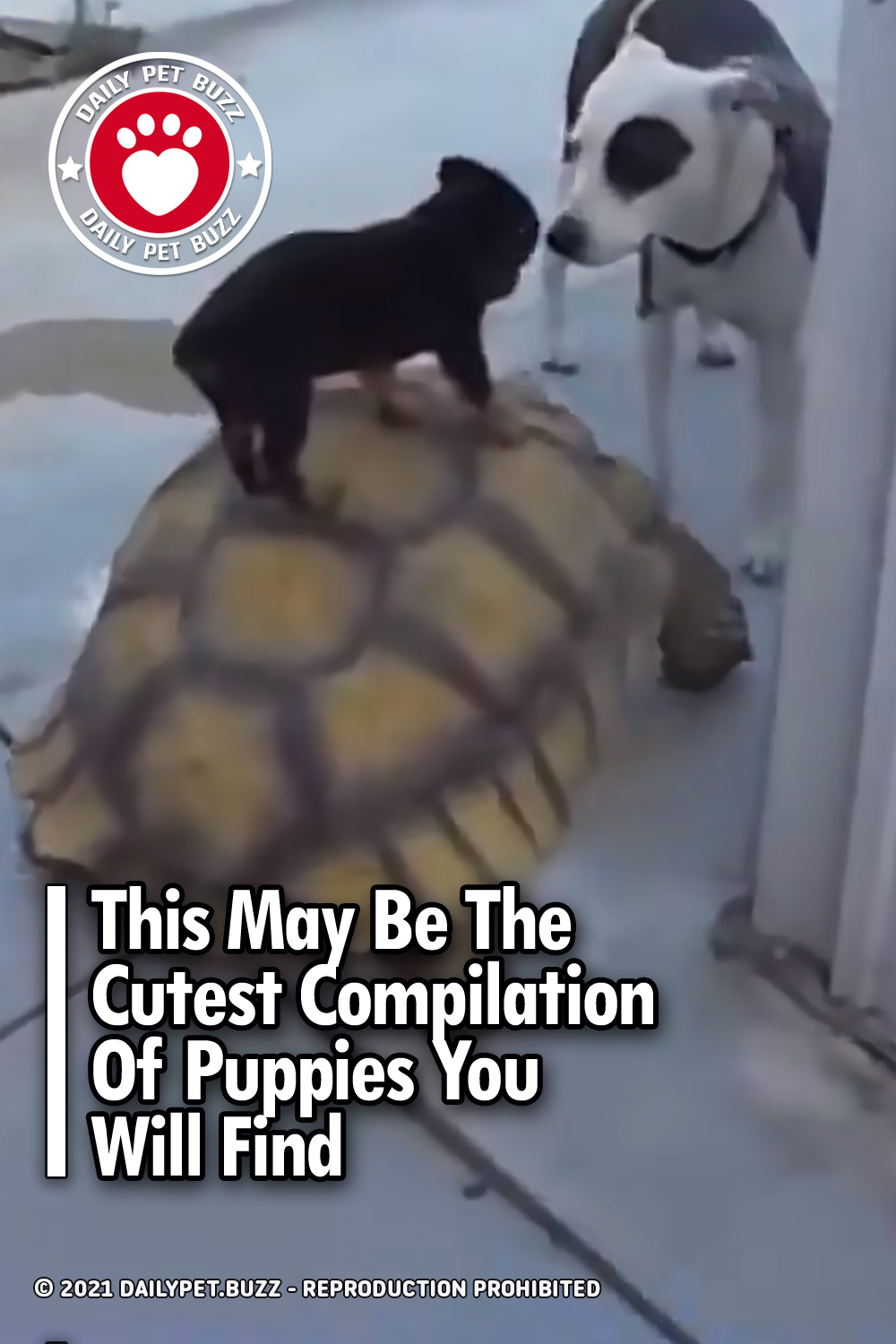 This May Be The Cutest Compilation Of Puppies You Will Find