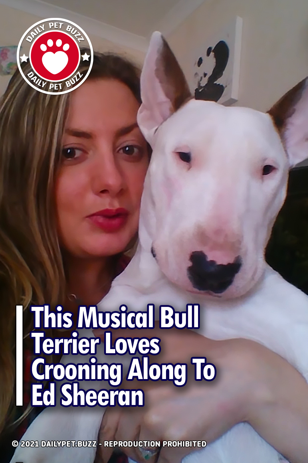This Musical Bull Terrier Loves Crooning Along To Ed Sheeran
