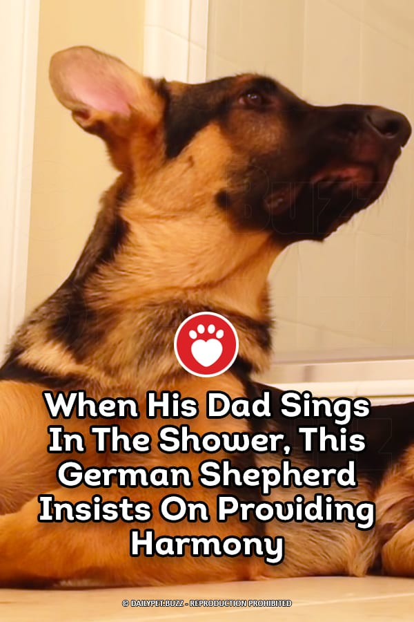 When His Dad Sings In The Shower, This German Shepherd Insists On Providing Harmony
