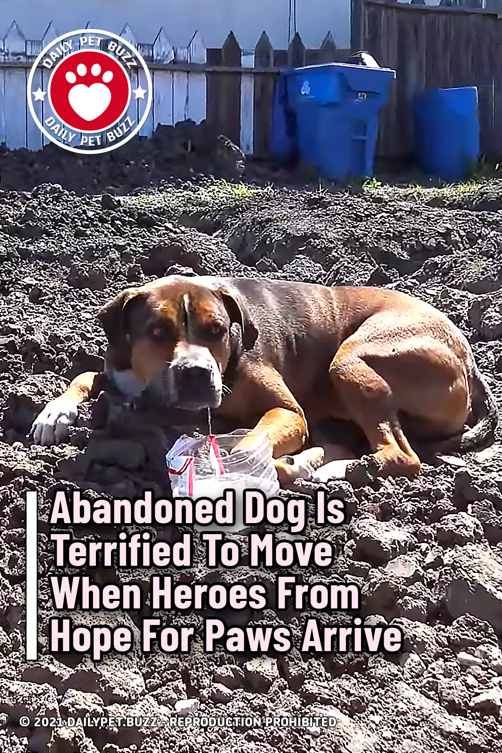 Abandoned Dog Is Terrified To Move When Heroes From Hope For Paws Arrive