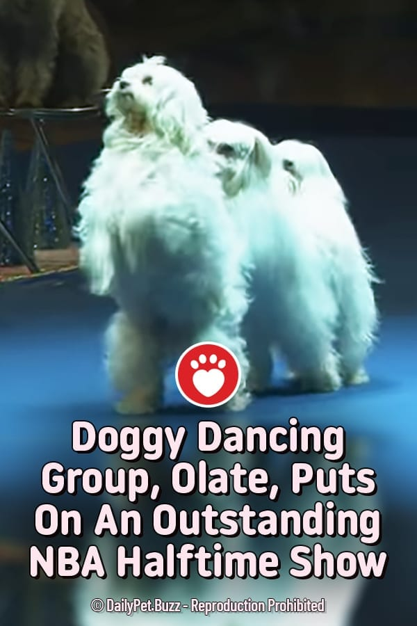 Doggy Dancing Group, Olate, Puts On An Outstanding NBA Halftime Show