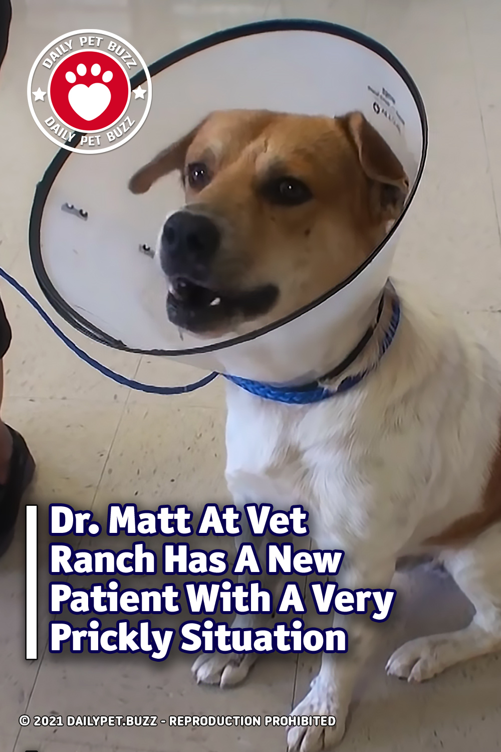 Dr. Matt At Vet Ranch Has A New Patient With A Very Prickly Situation