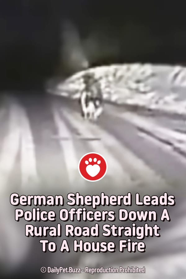 German Shepherd Leads Police Officers Down A Rural Road Straight To A House Fire