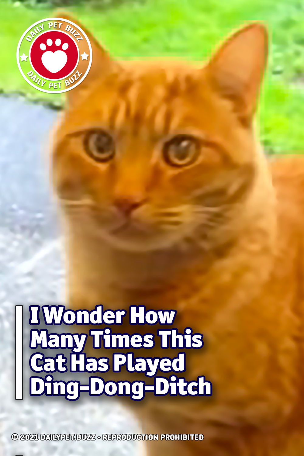I Wonder How Many Times This Cat Has Played Ding-Dong-Ditch