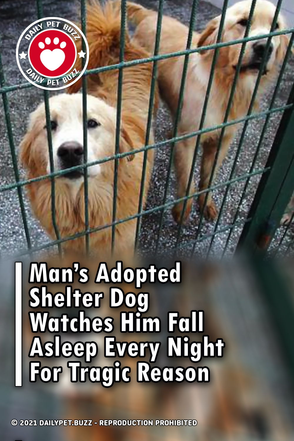 Man\'s Adopted Shelter Dog Watches Him Fall Asleep Every Night For Tragic Reason