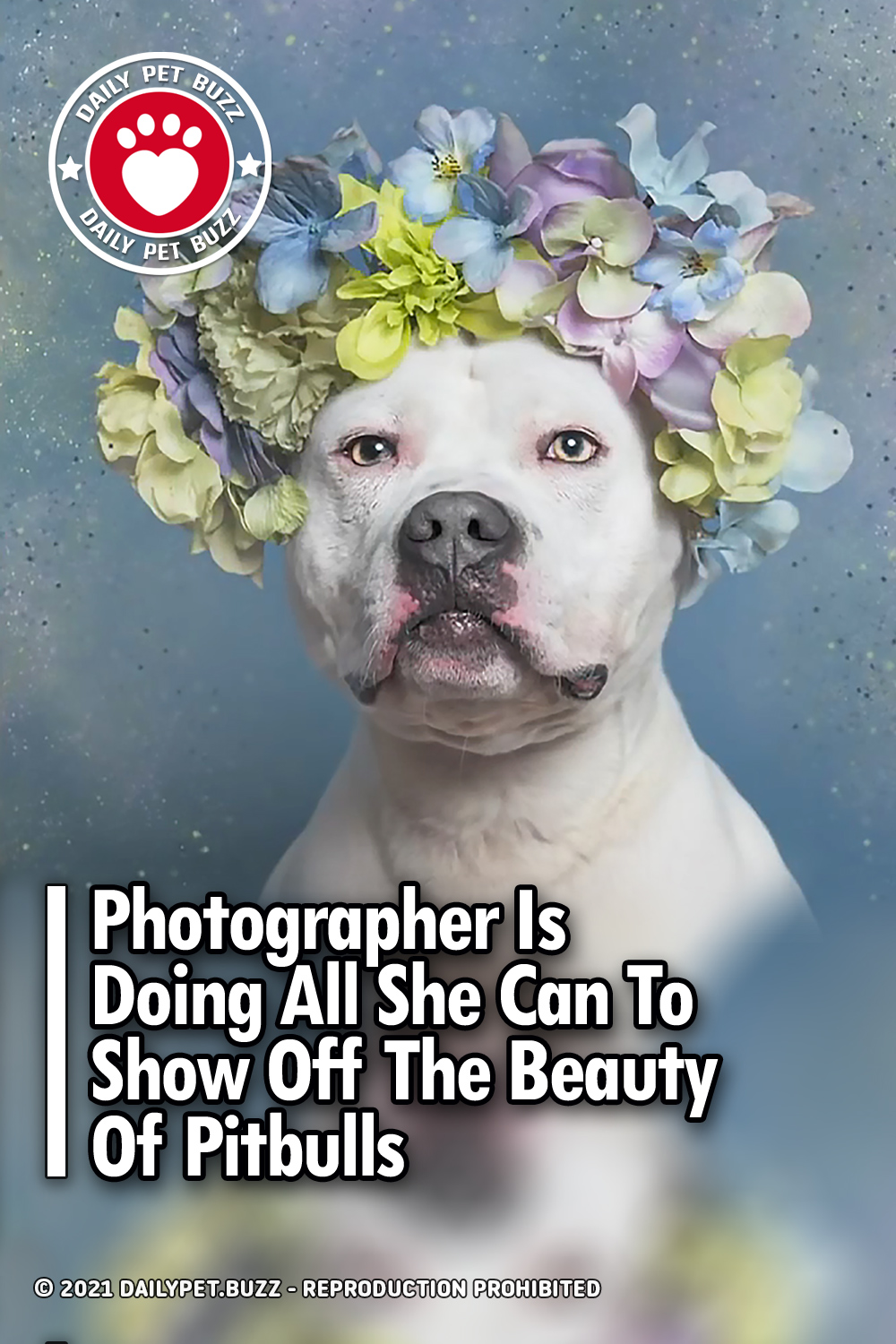 Photographer Is Doing All She Can To Show Off The Beauty Of Pitbulls