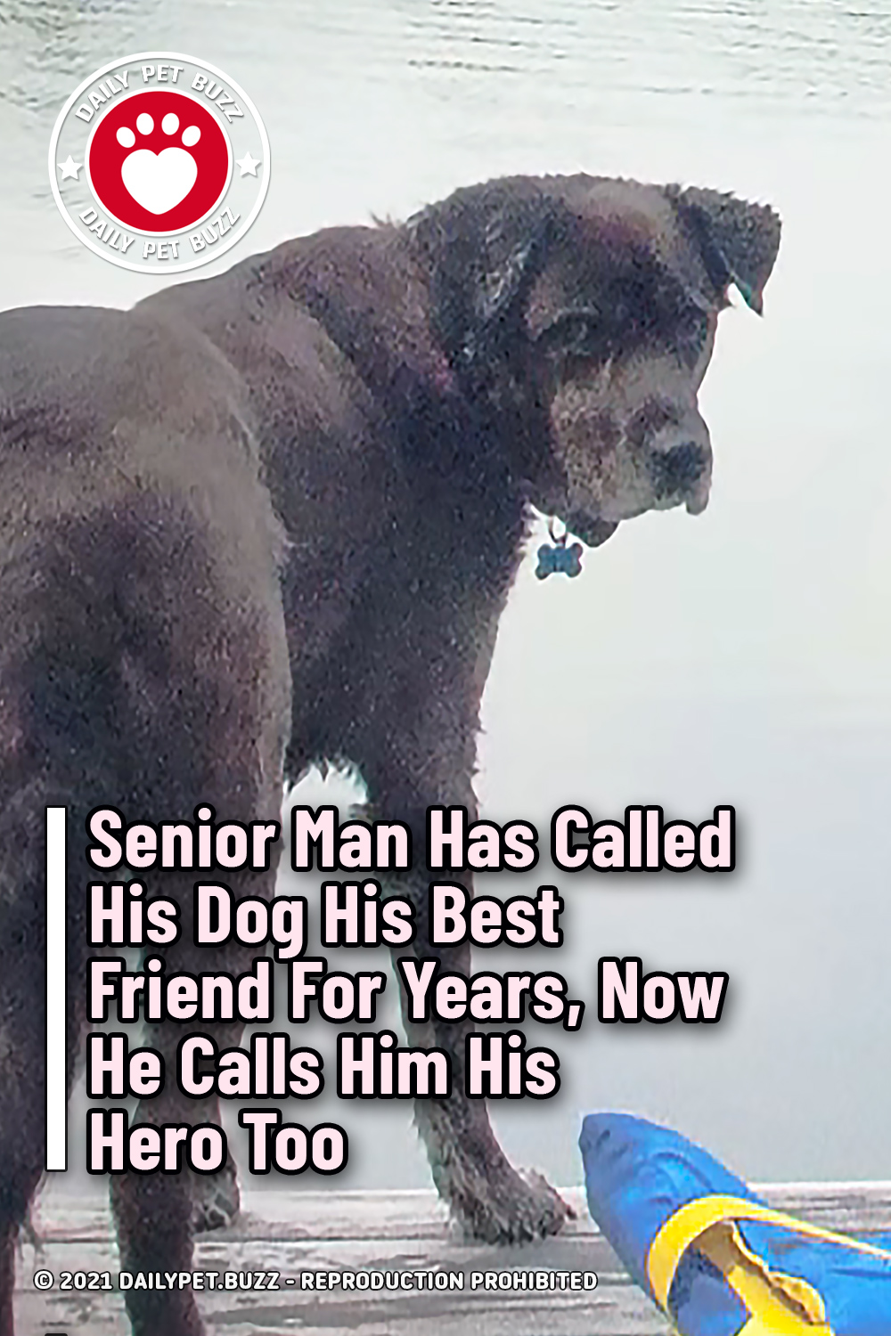Senior Man Has Called His Dog His Best Friend For Years, Now He Calls Him His Hero Too