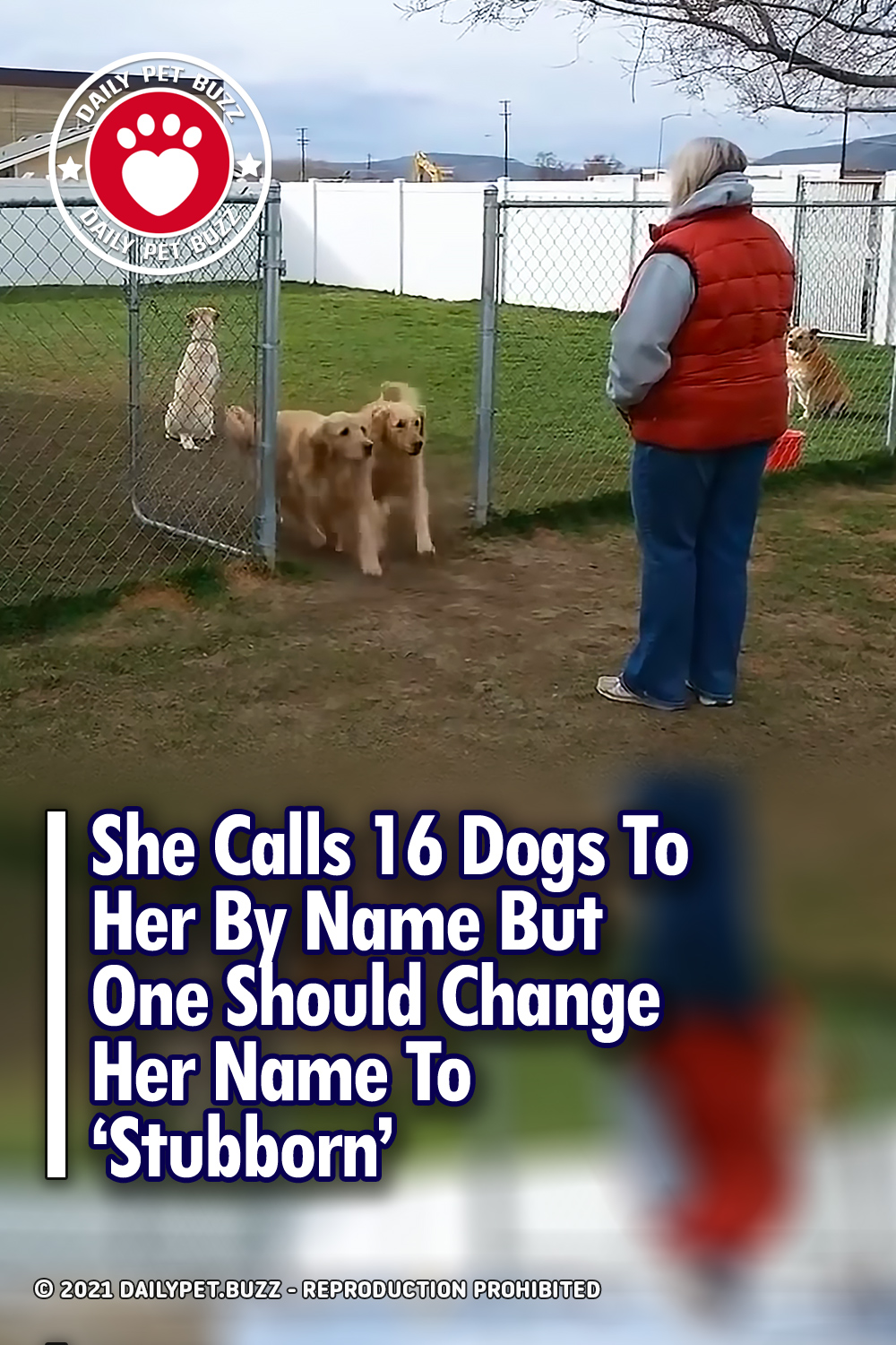 She Calls 16 Dogs To Her By Name But One Should Change Her Name To \'Stubborn\'