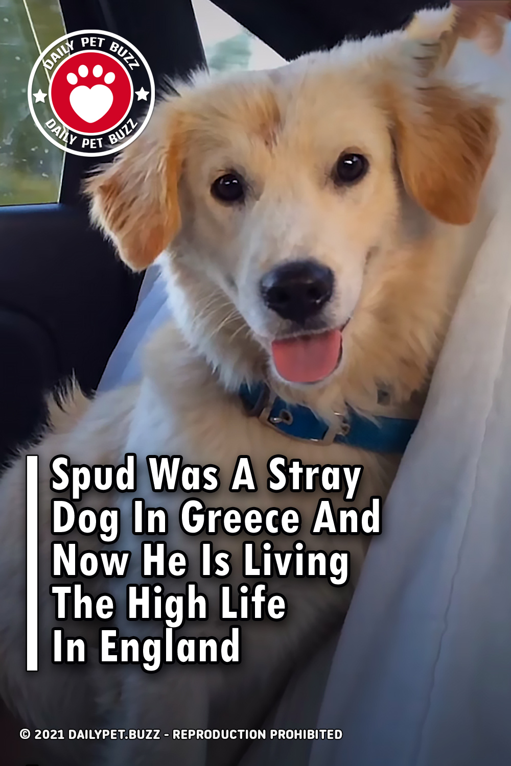 Spud Was A Stray Dog In Greece And Now He Is Living The High Life In England
