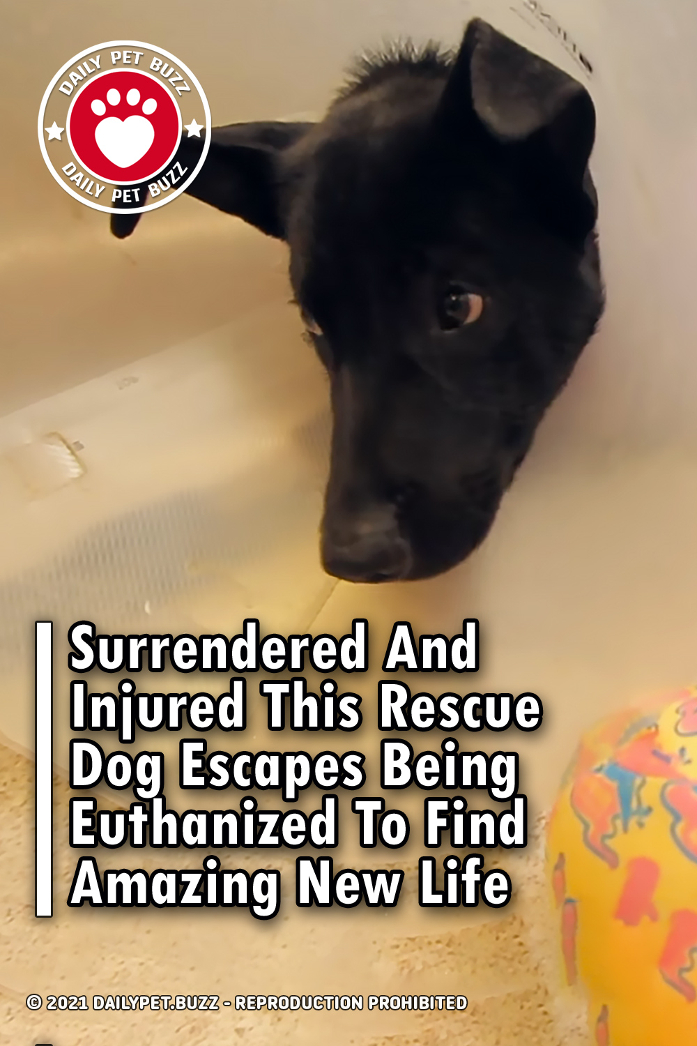 Surrendered And Injured This Rescue Dog Escapes Being Euthanized To Find Amazing New Life