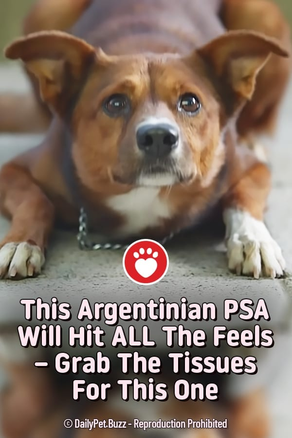 This Argentinian PSA Will Hit ALL The Feels – Grab The Tissues For This One