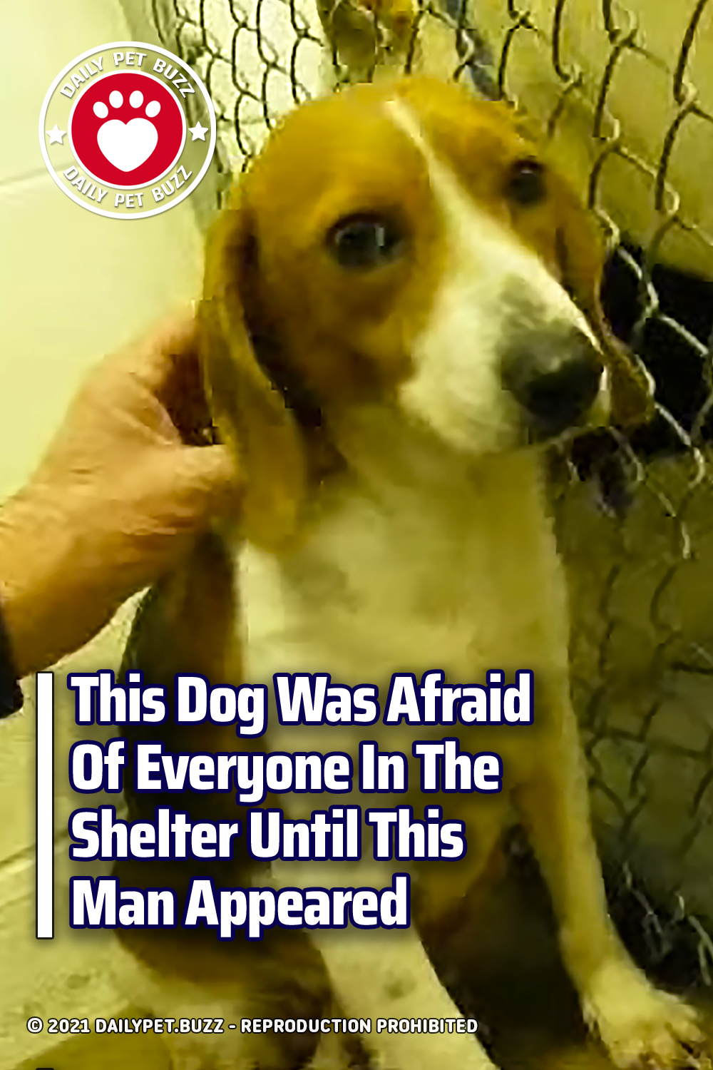 This Dog Was Afraid Of Everyone In The Shelter Until This Man Appeared