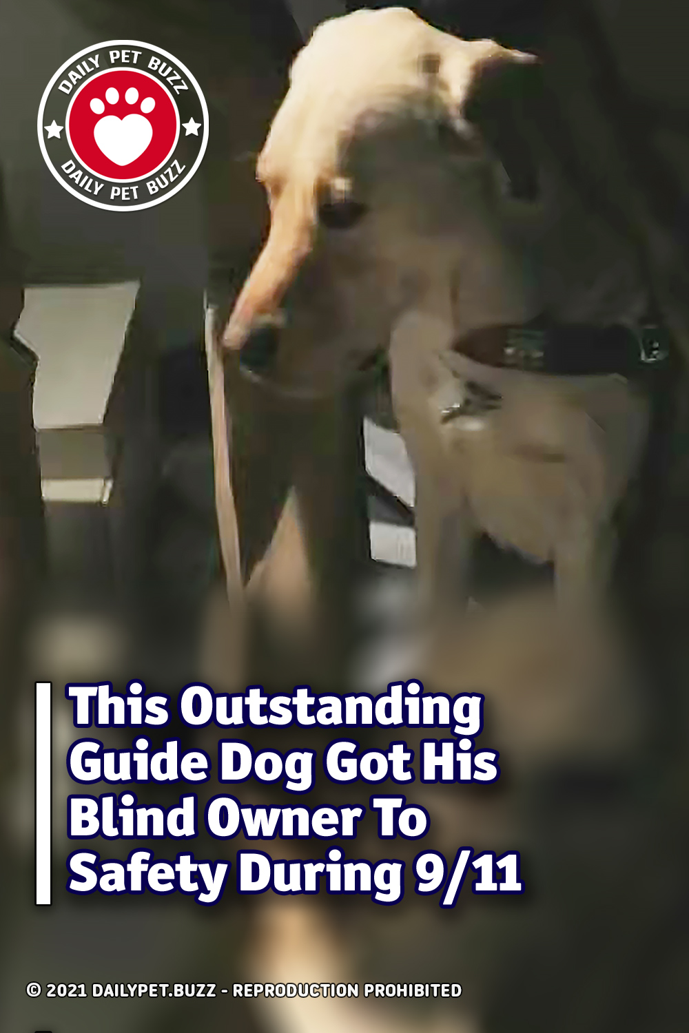This Outstanding Guide Dog Got His Blind Owner To Safety During 9/11