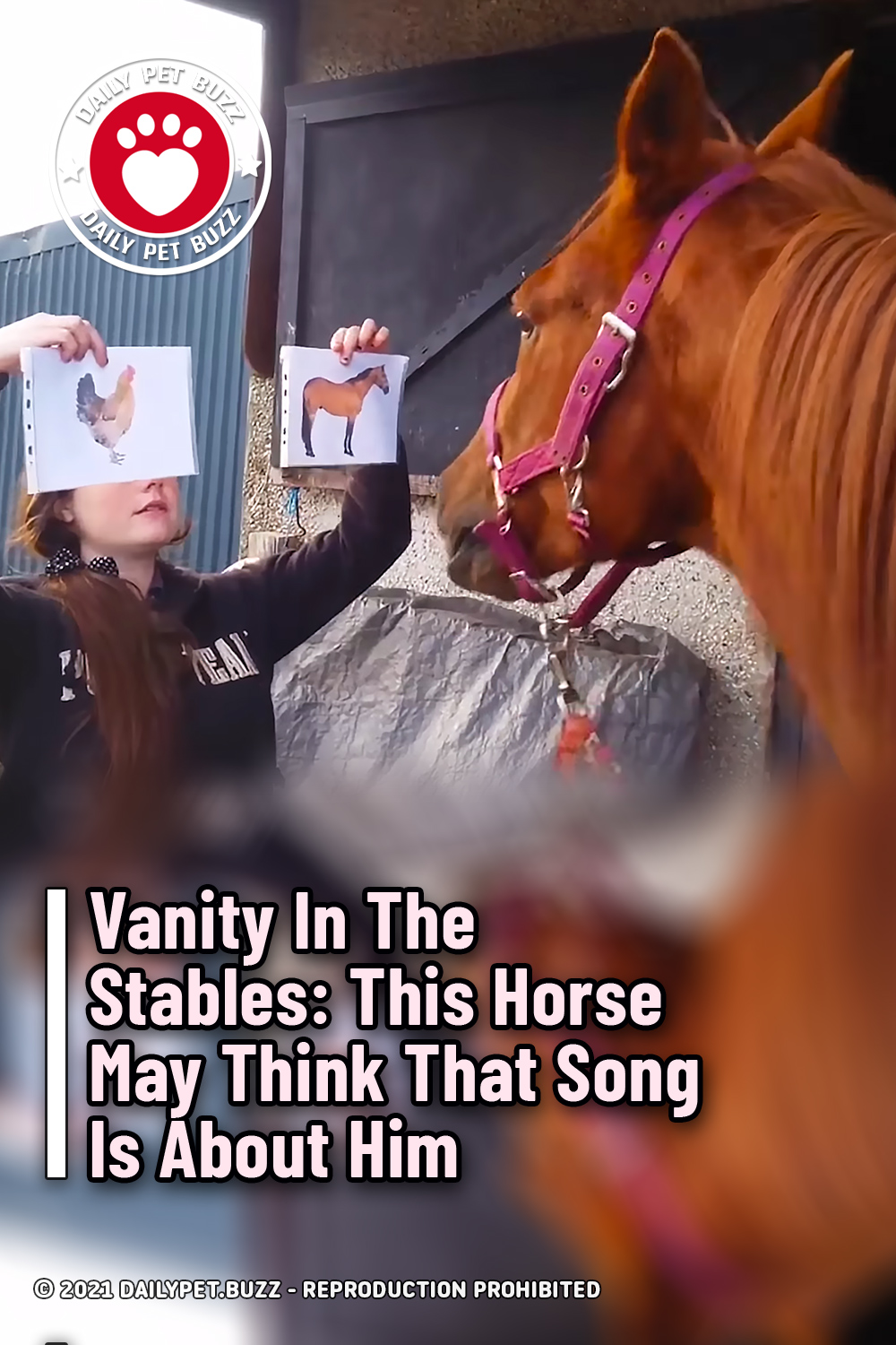 Vanity In The Stables: This Horse May Think That Song Is About Him