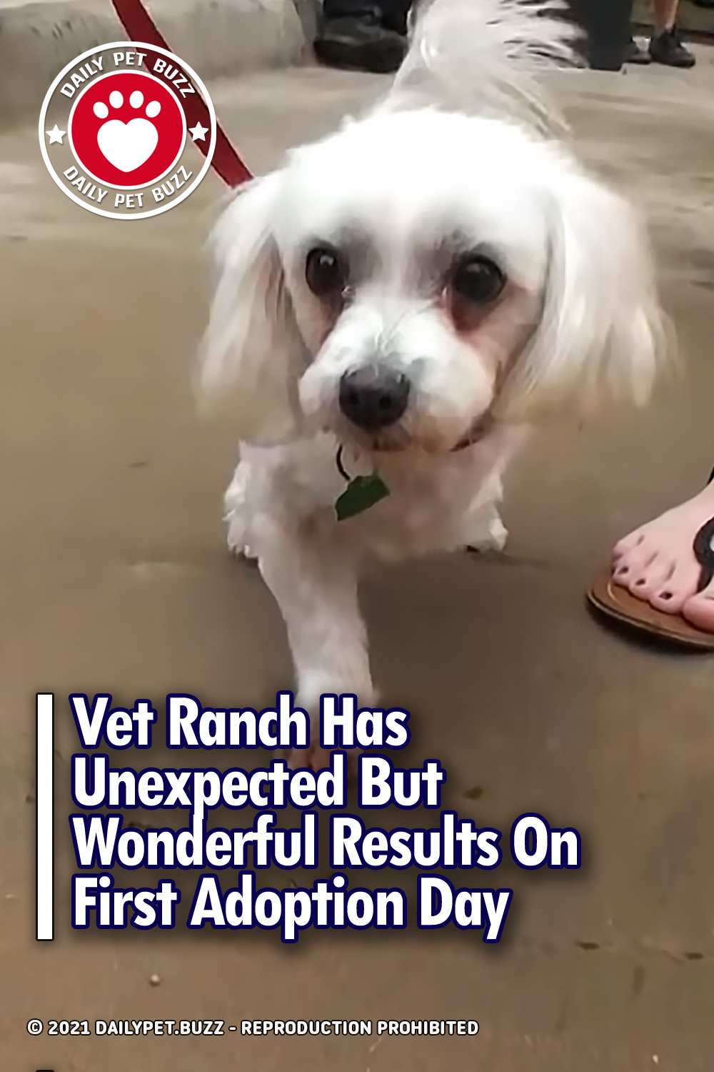 Vet Ranch Has Unexpected But Wonderful Results On First Adoption Day