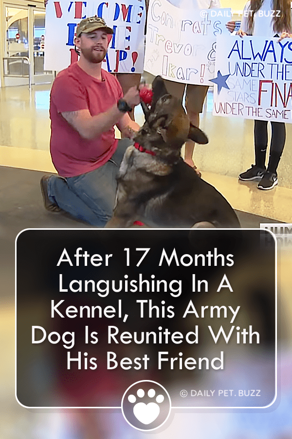 After 17 Months Languishing In A Kennel, This Army Dog Is Reunited With His Best Friend