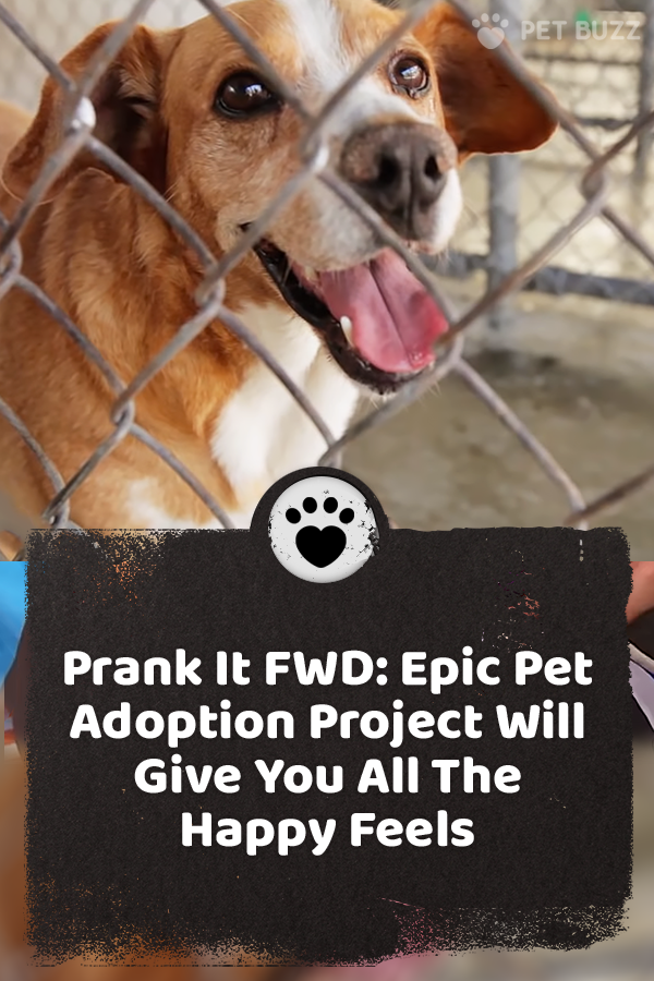 Prank It FWD: Epic Pet Adoption Project Will Give You All The Happy Feels