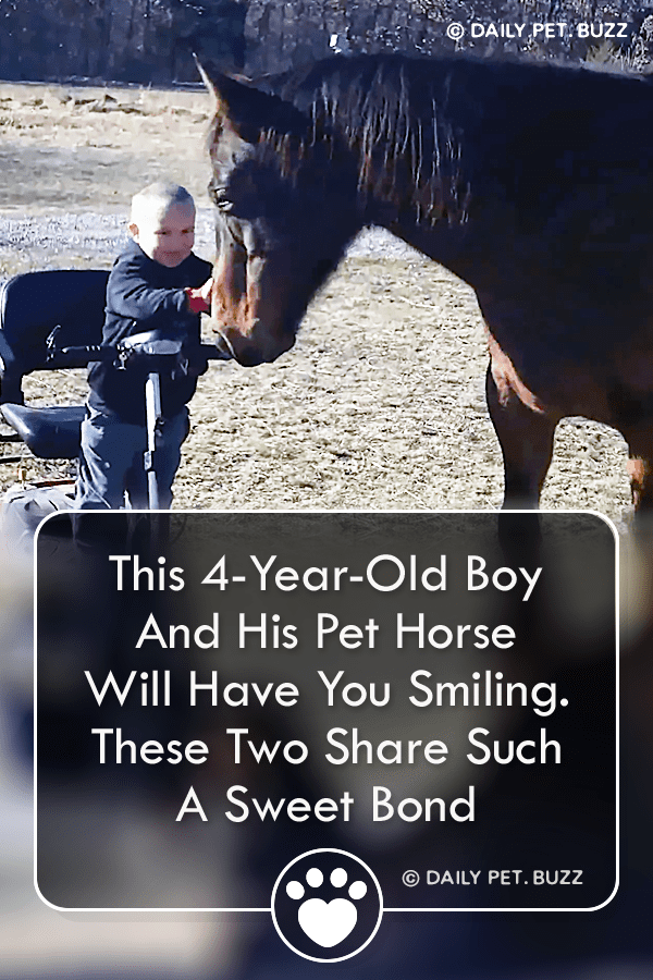 This 4-Year-Old Boy And His Pet Horse Will Have You Smiling. These Two Share Such A Sweet Bond