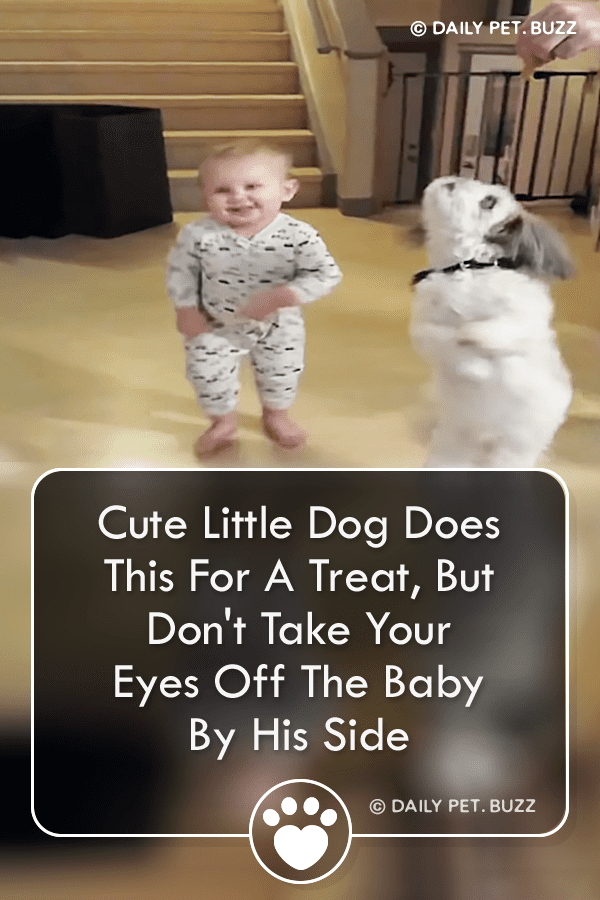 Cute Little Dog Does This For A Treat, But Don\'t Take Your Eyes Off The Baby By His Side