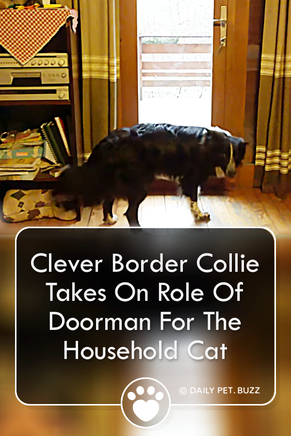 Clever Border Collie Take On Role Of Doorman For The Household Cat