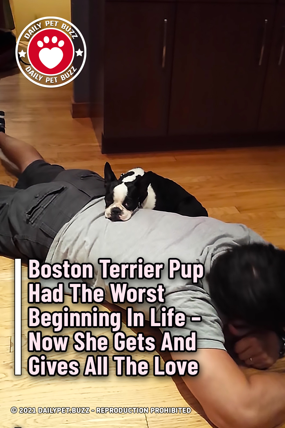 Boston Terrier Pup Had The Worst Beginning In Life – Now She Gets And Gives All The Love