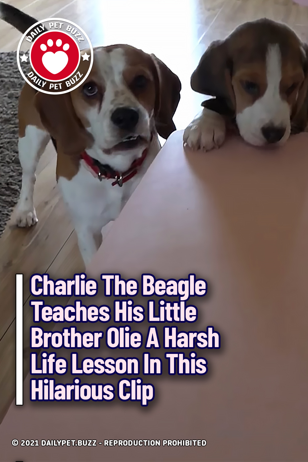 Charlie The Beagle Teaches His Little Brother Olie A Harsh Life Lesson In This Hilarious Clip