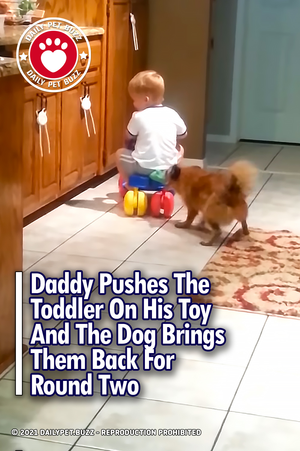 Daddy Pushes The Toddler On His Toy And The Dog Brings Them Back For Round Two