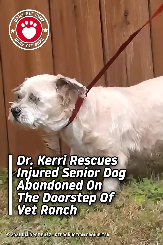 Dr. Kerri Rescues Injured Senior Dog Abandoned On The Doorstep Of Vet Ranch