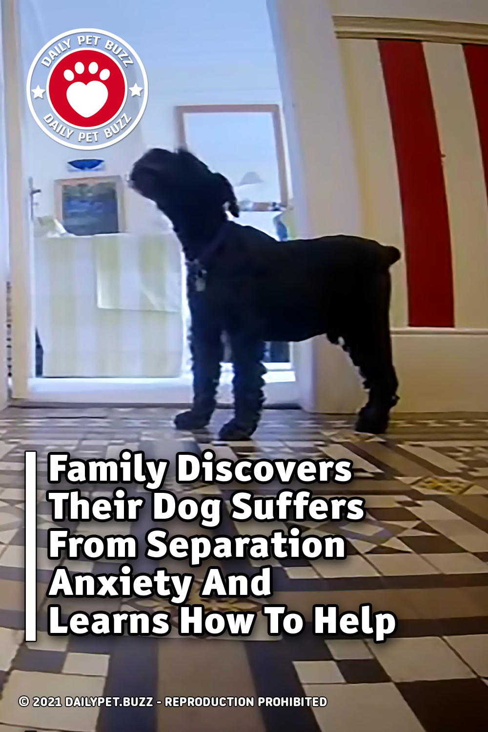 Family Discovers Their Dog Suffers From Separation Anxiety And Learns How To Help