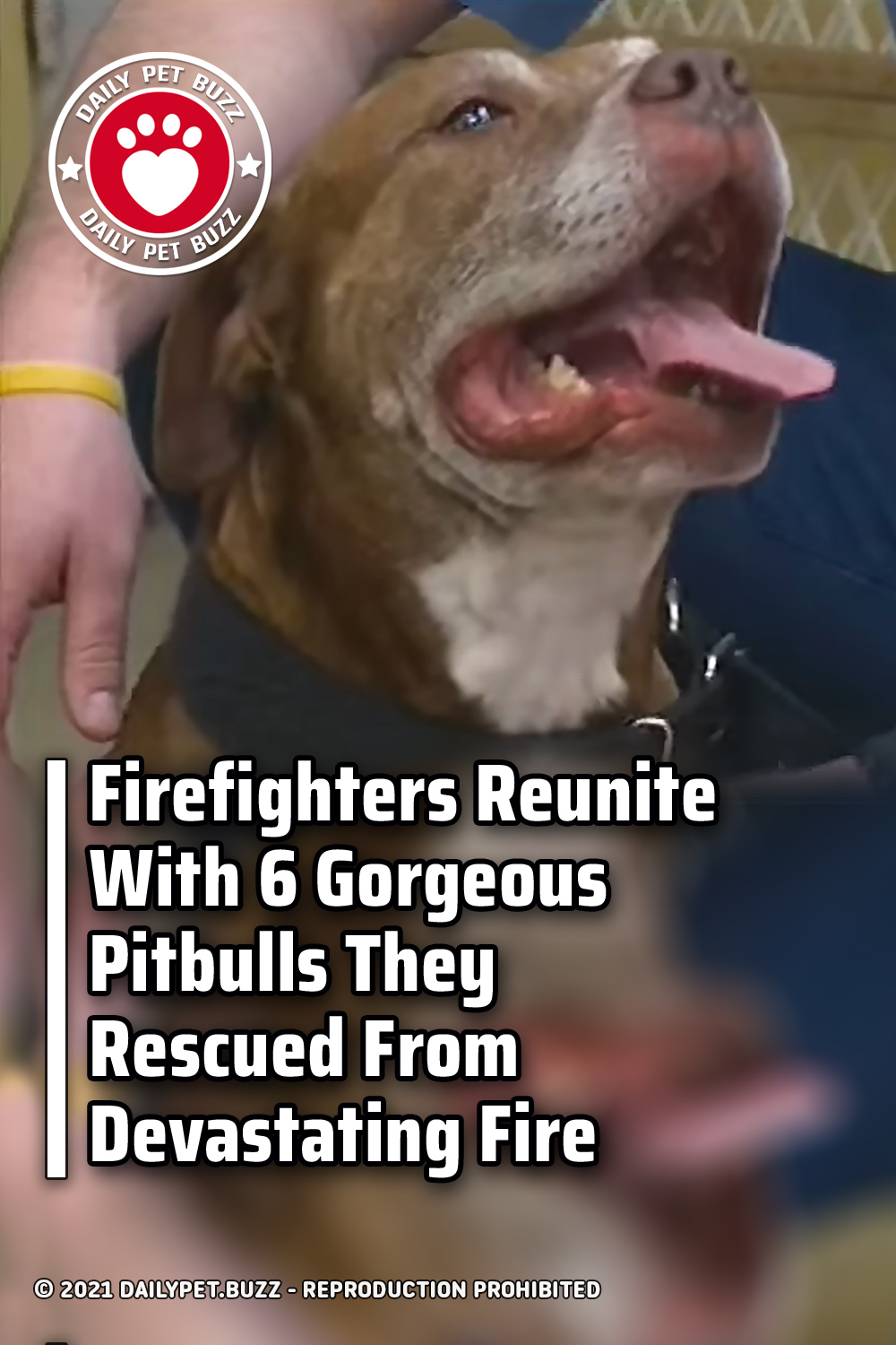 Firefighters Reunite With 6 Gorgeous Pitbulls They Rescued From Devastating Fire