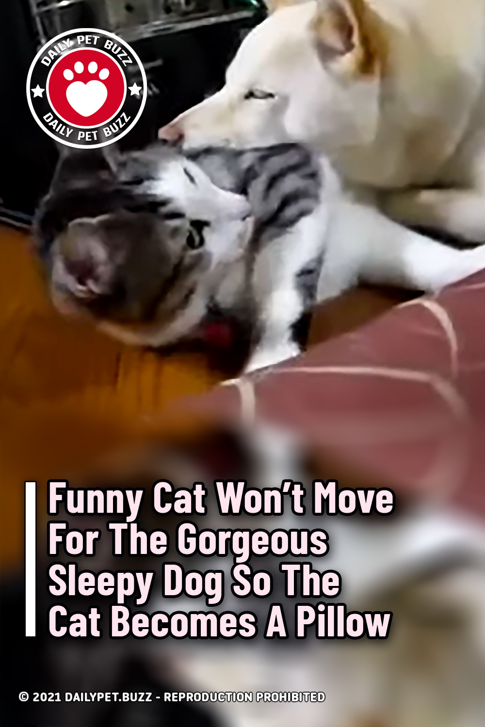 Funny Cat Won\'t Move For The Gorgeous Sleepy Dog So The Cat Becomes A Pillow