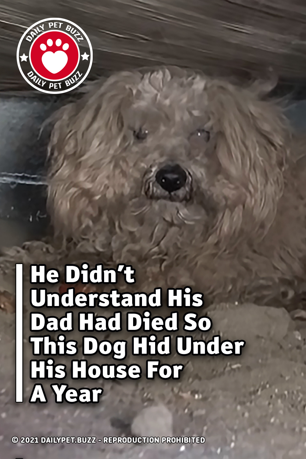 He Didn\'t Understand His Dad Had Died So This Dog Hid Under His House For A Year