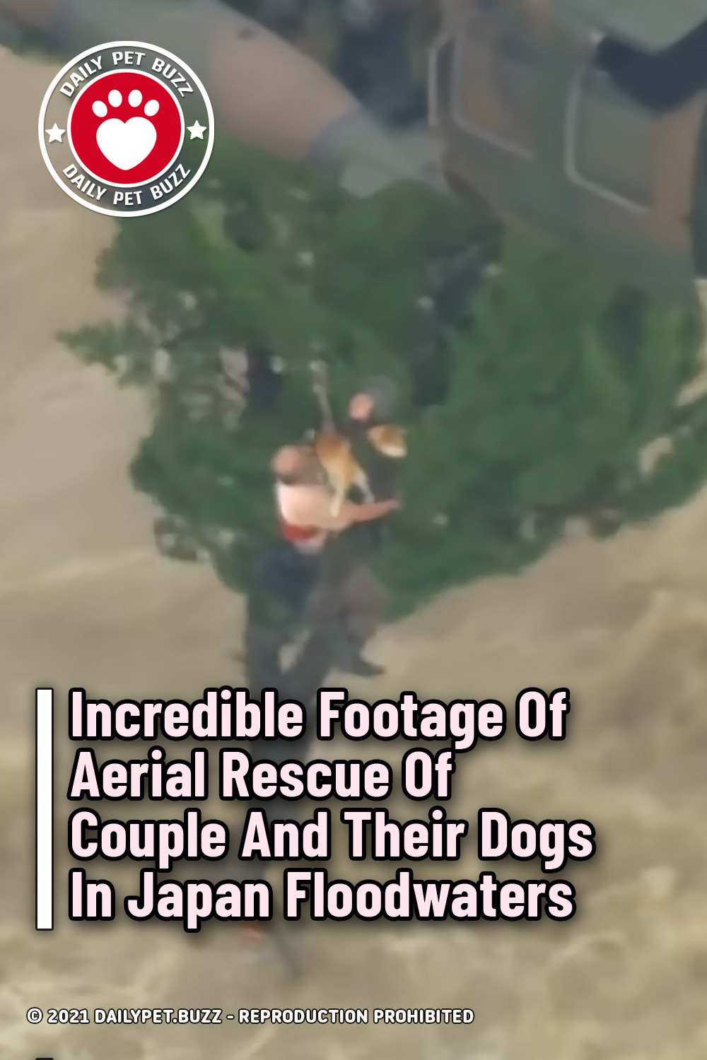Incredible Footage Of Aerial Rescue Of Couple And Their Dogs In Japan Floodwaters