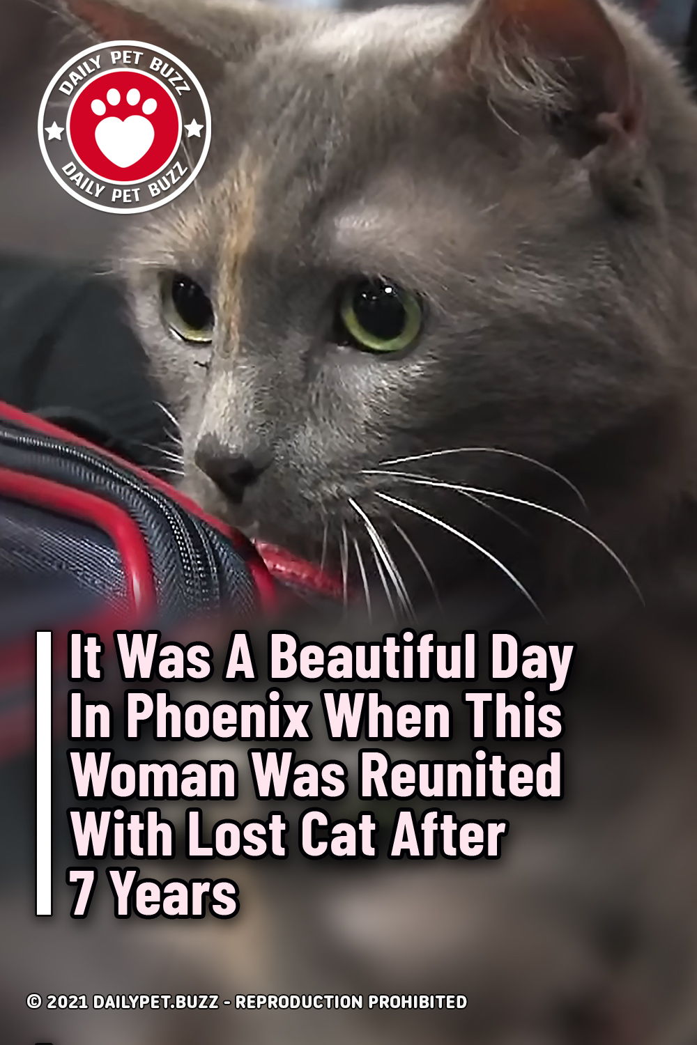It Was A Beautiful Day In Phoenix When This Woman Was Reunited With Lost Cat After 7 Years