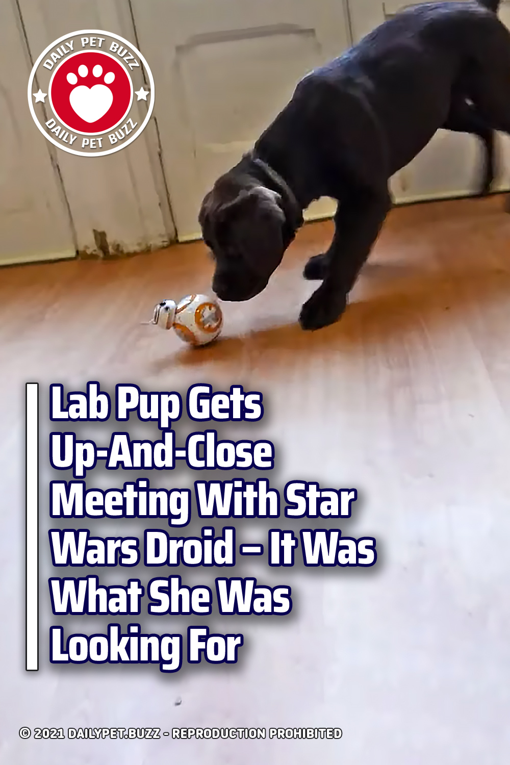 Lab Pup Gets Up-And-Close Meeting With Star Wars Droid. It Was What She Was Looking For