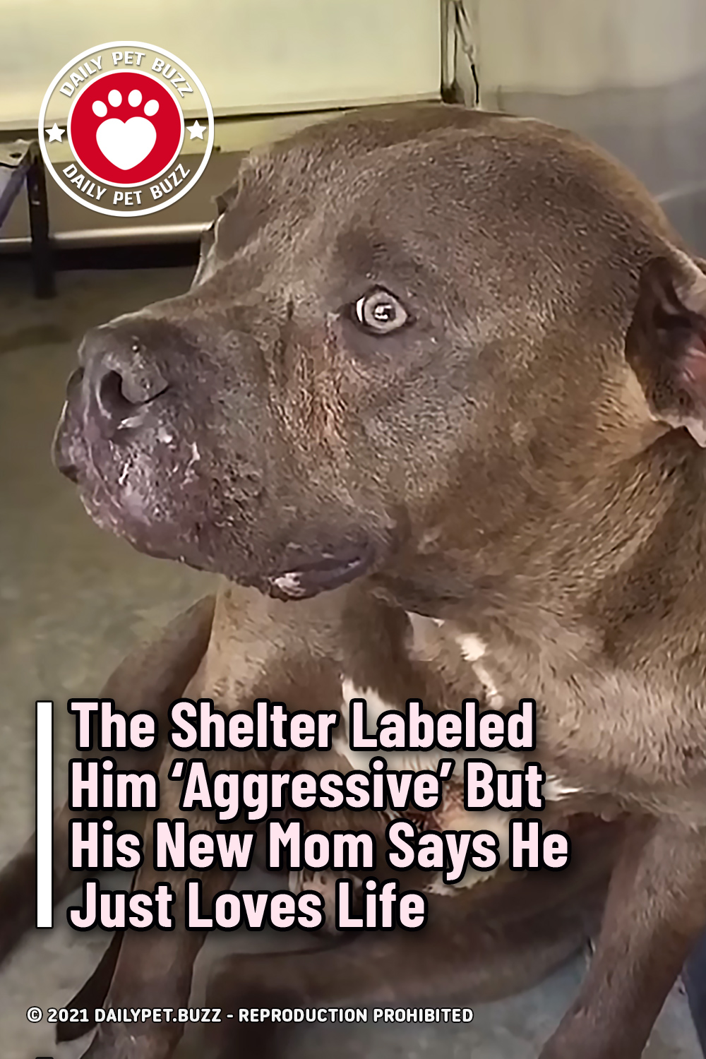 The Shelter Labeled Him \'Aggressive\' But His New Mom Says He Just Loves Life