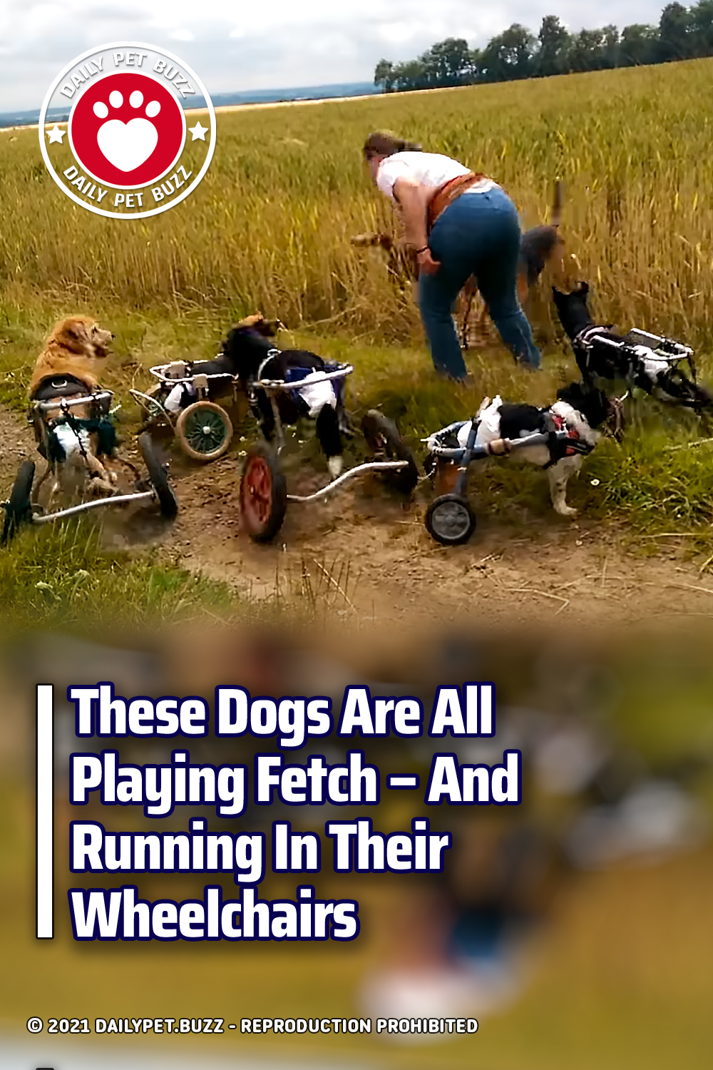 These Dogs Are All Playing Fetch – And Running In Their Wheelchairs