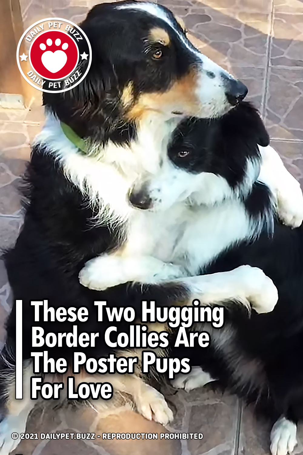 These Two Hugging Border Collies Are The Poster Pups For Love