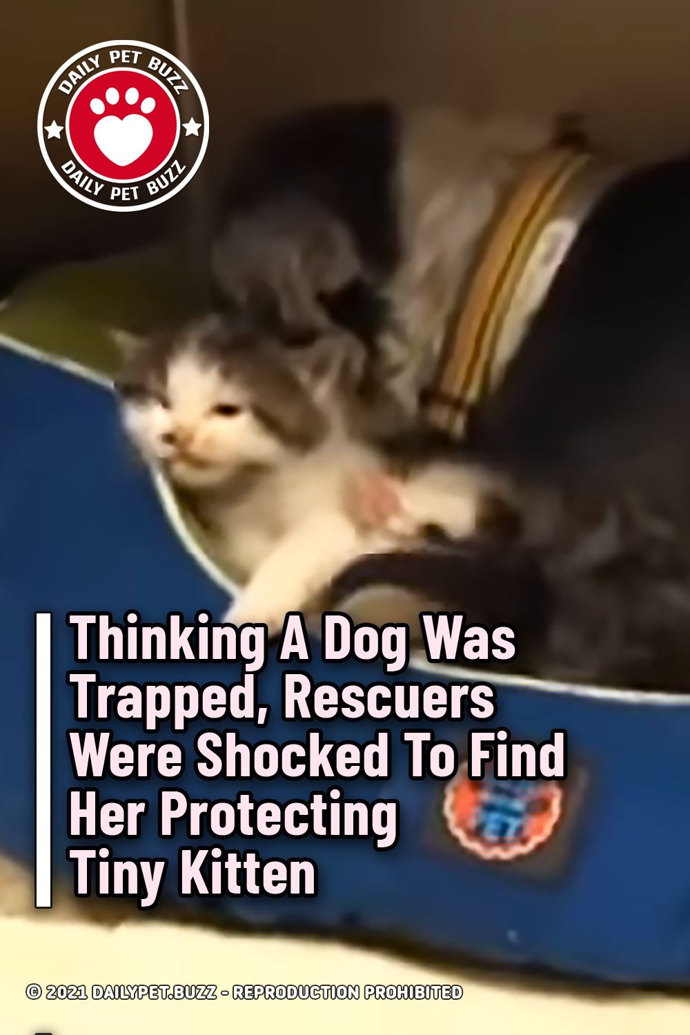 Thinking A Dog Was Trapped, Rescuers Were Shocked To Find Her Protecting Tiny Kitten