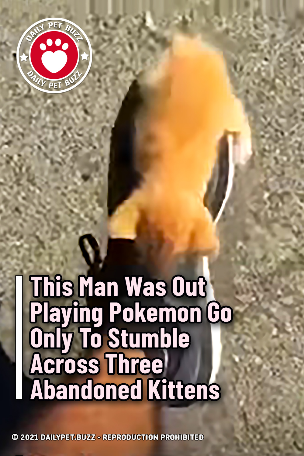 This Man Was Out Playing Pokemon Go Only To Stumble Across Three Abandoned Kittens