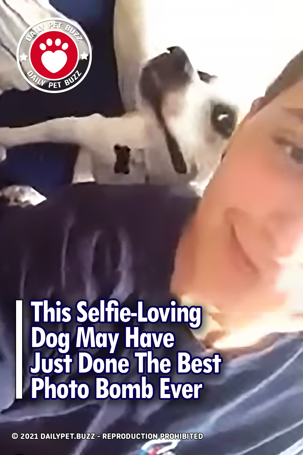 This Selfie-Loving Dog May Have Just Done The Best Photo Bomb Ever