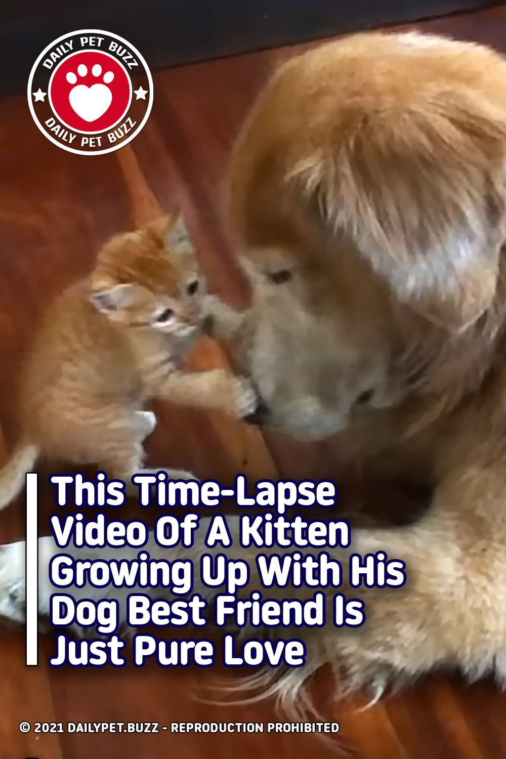This Time-Lapse Video Of A Kitten Growing Up With His Dog Best Friend Is Just Pure Love