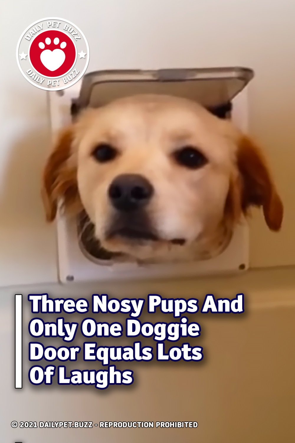 Three Nosy Pups And Only One Doggie Door Equals Lots Of Laughs